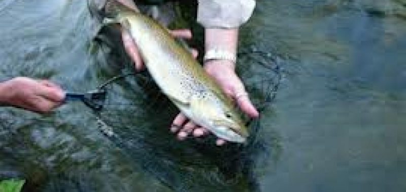 Pêche - Camping en bord de rivière